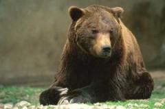 Ucciso l'Orso Stefano a fucilate
